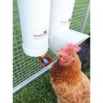 Royal Rooster Twin Cup Drinker & Feeder Set  review