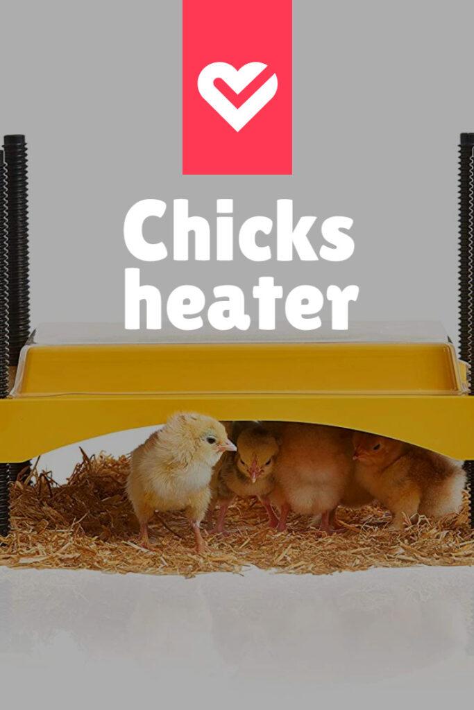 chicken heat