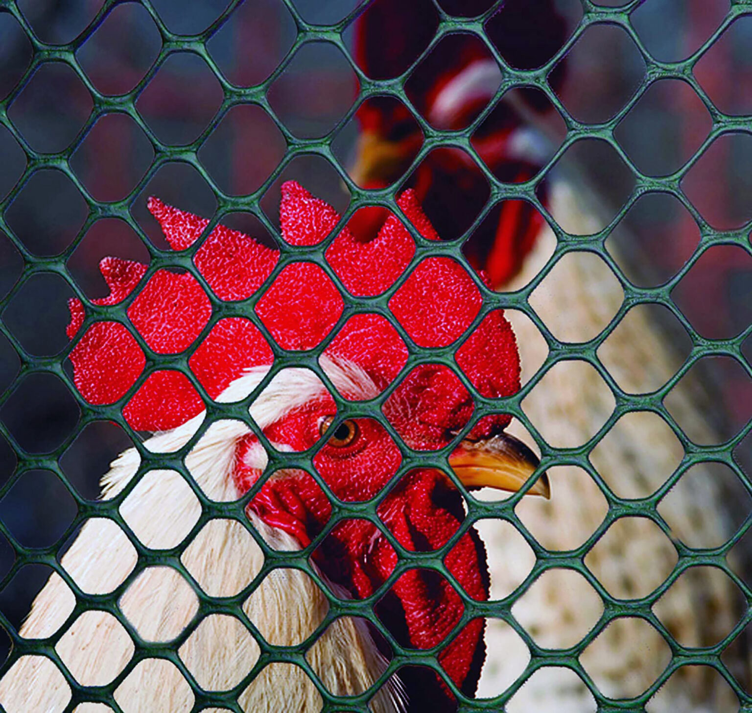 Poultry Fence review