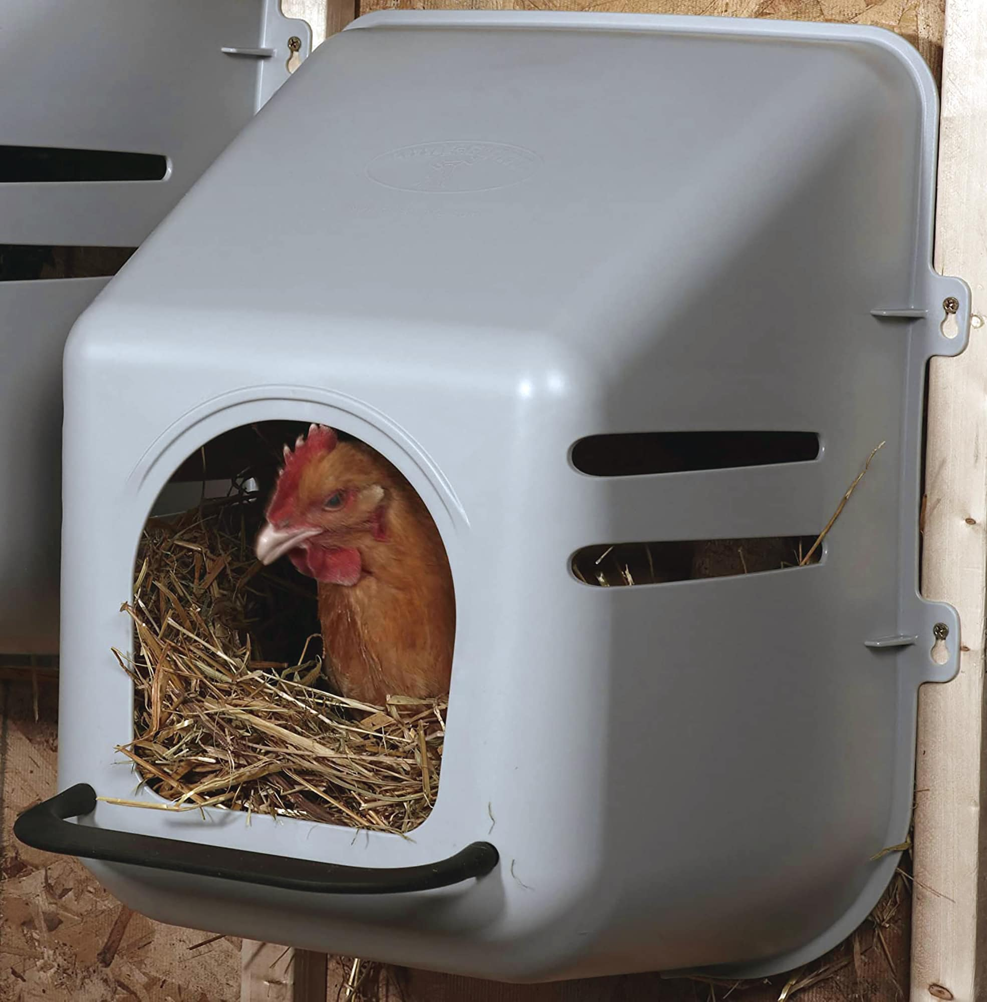 Plastic Nesting Box review