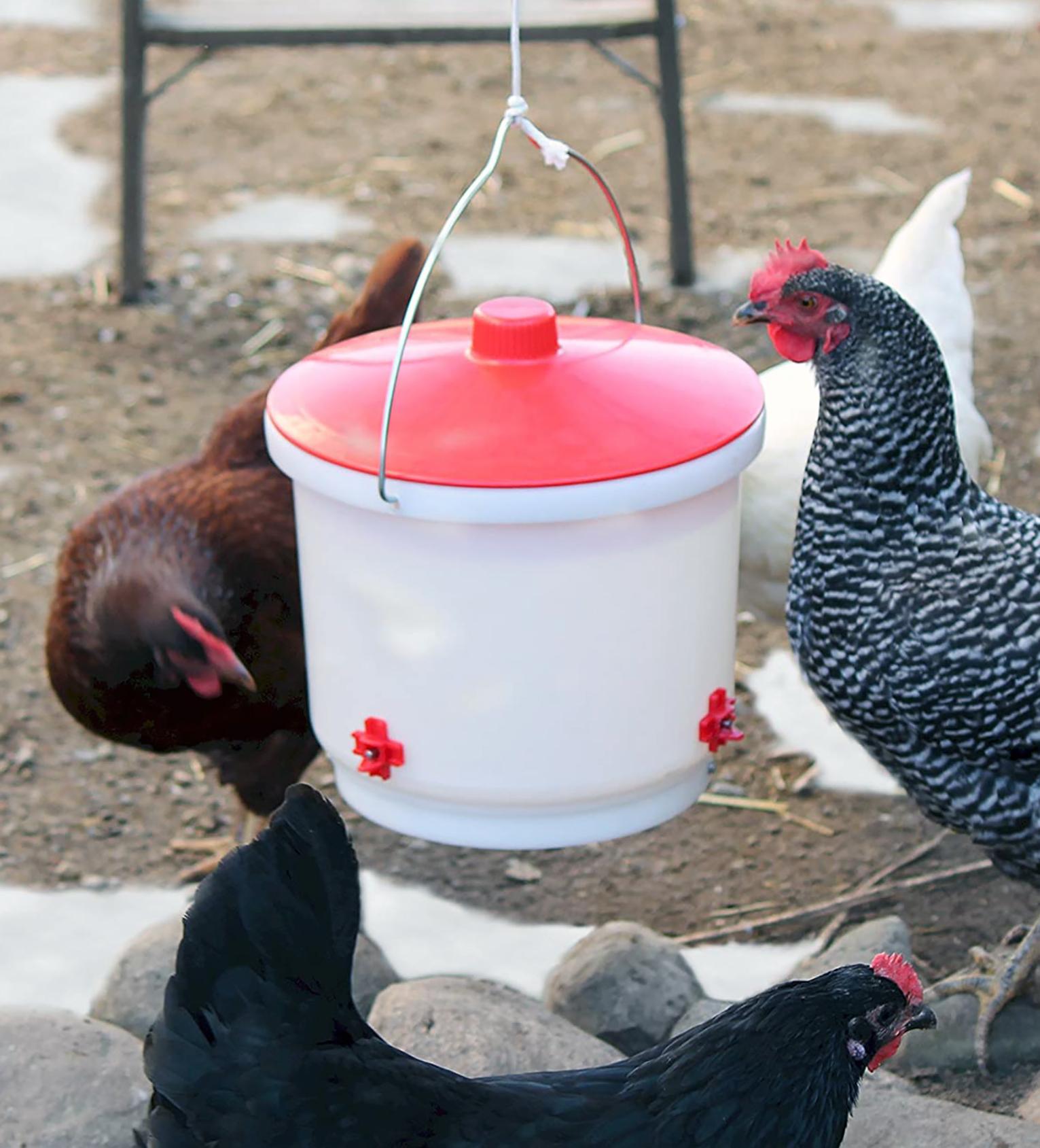 heated poultry drinker