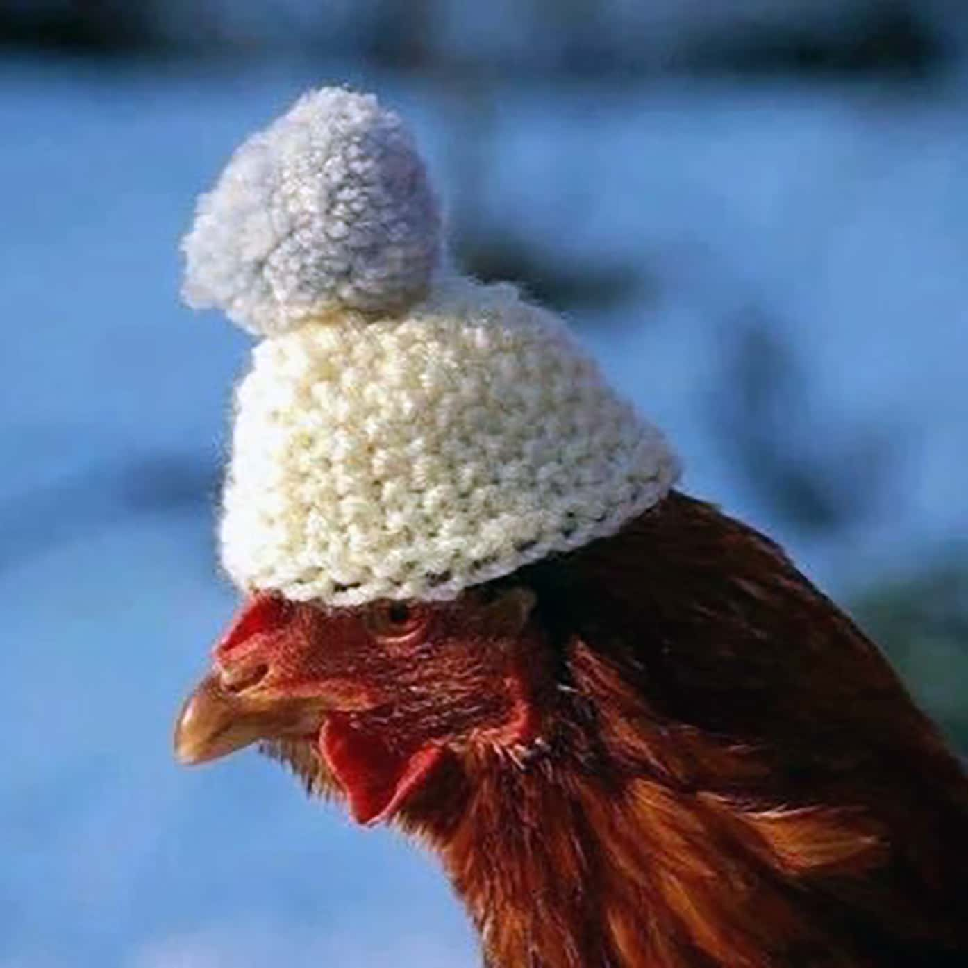 chicken heater for winter