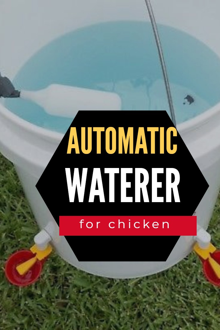 The best Automatic Chicken Waterer