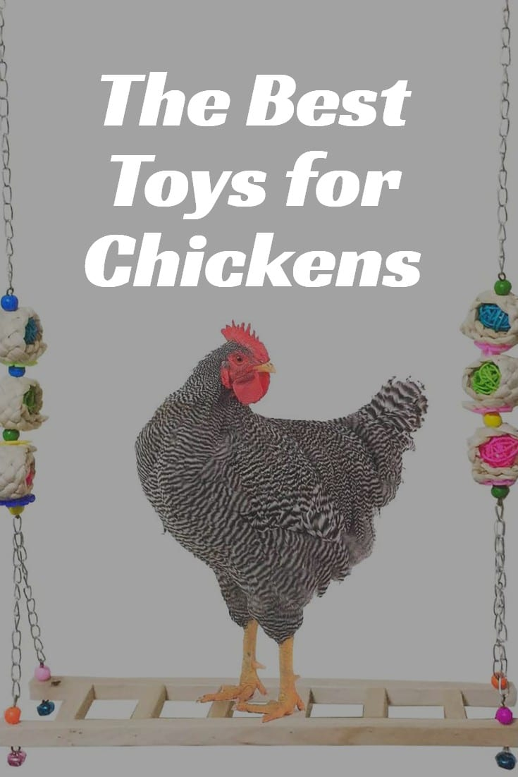 toys for chicks