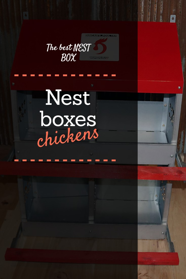 The best NEST BOXes for chickens