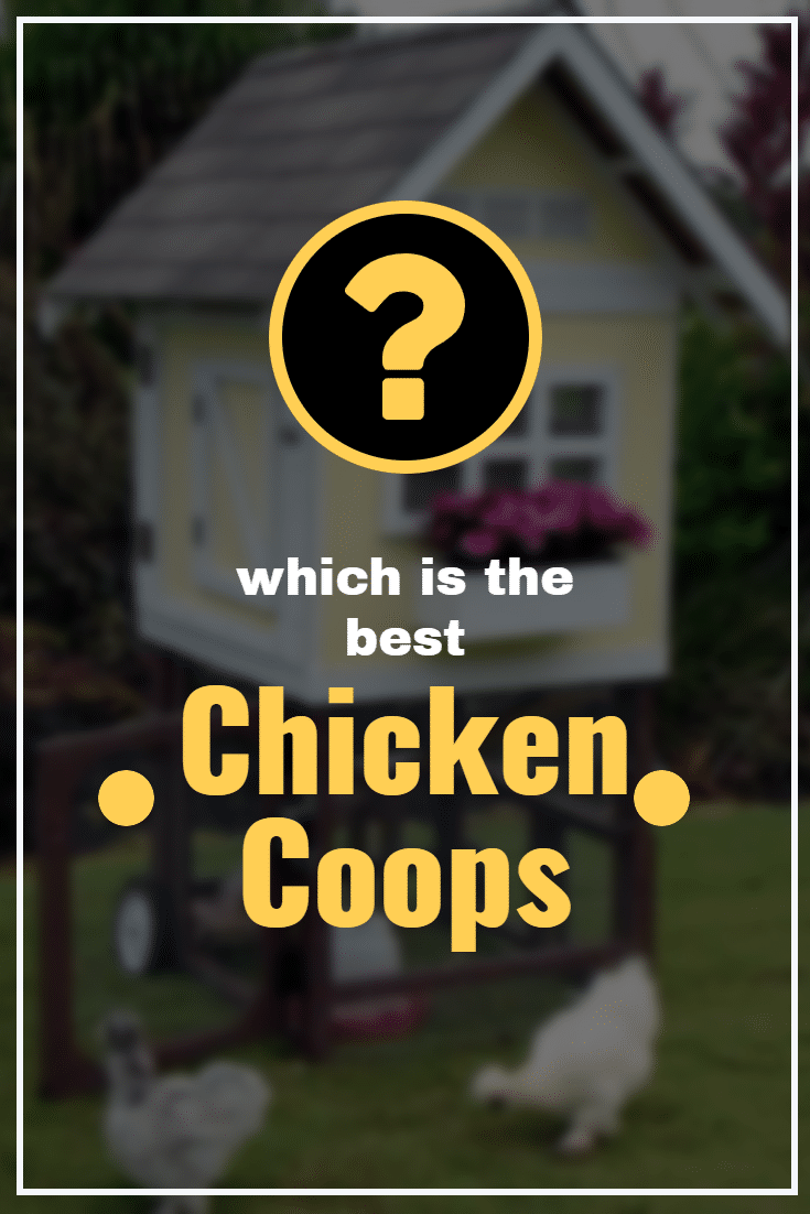 The best small CHICKEN COOP