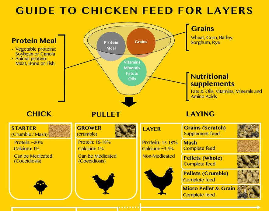 chicken feed for layers