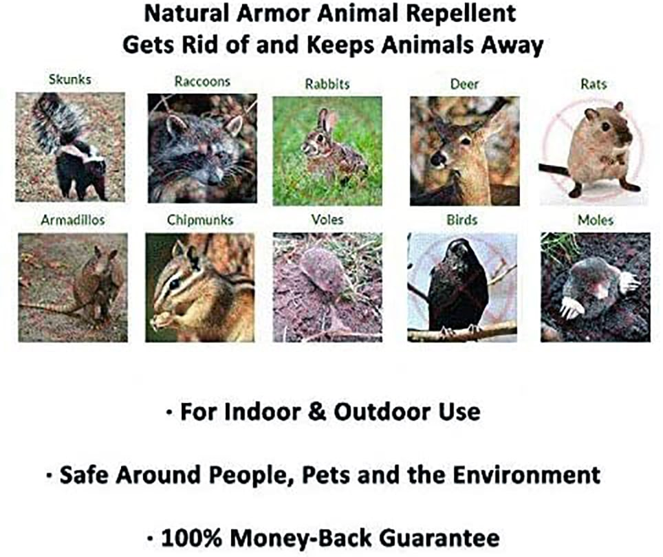 best squirrel repellent