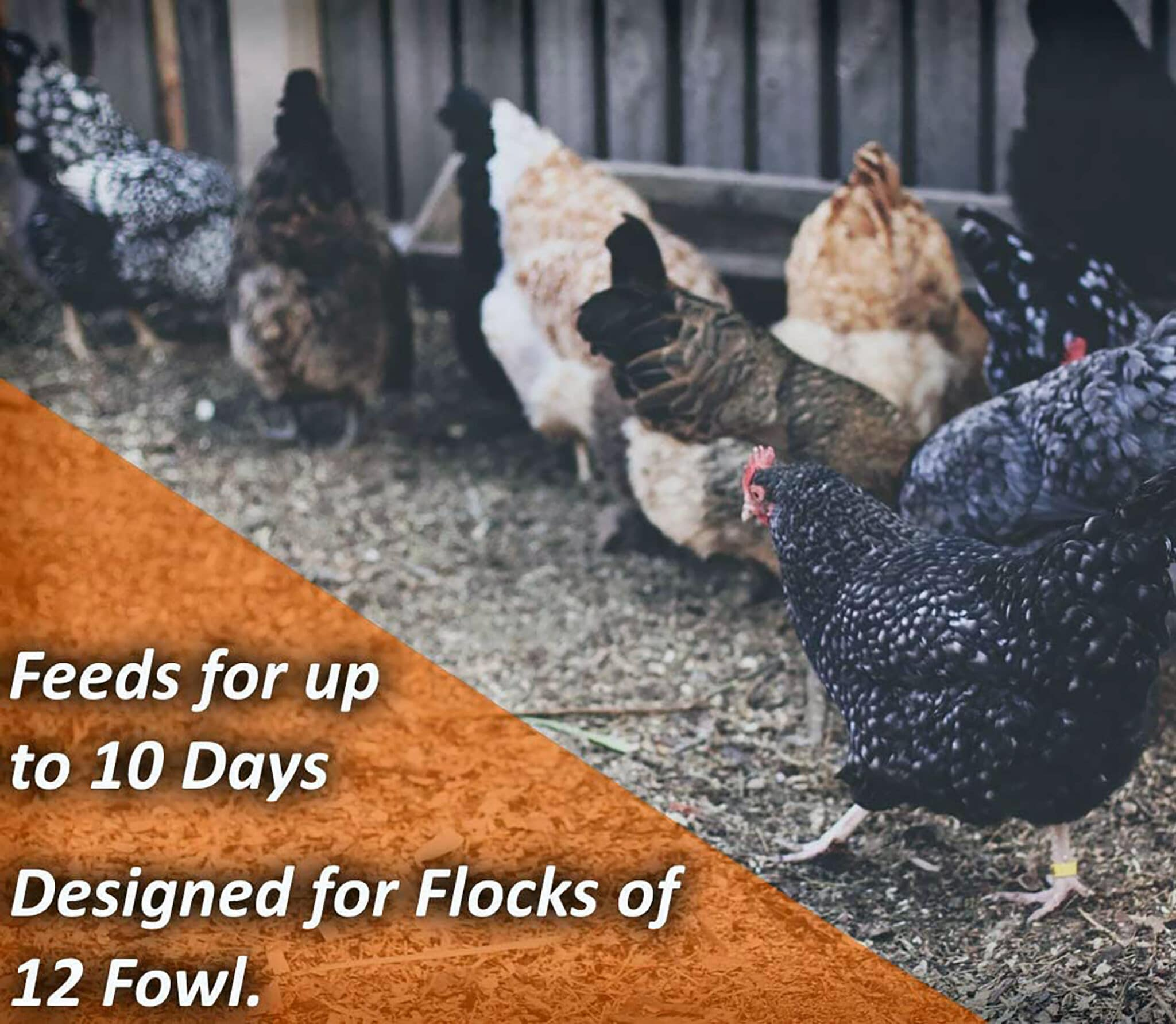 Fowl Up to 10 Days Keeps Dry