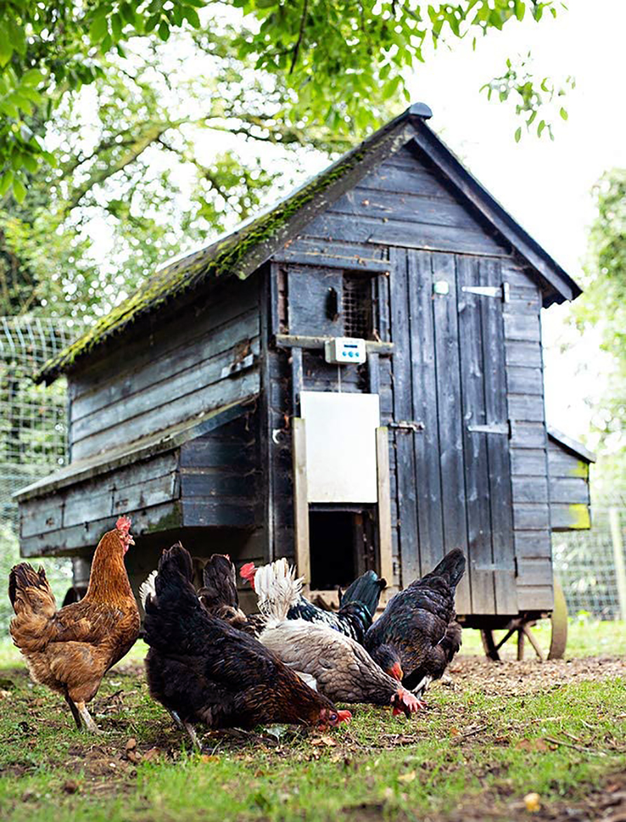 ChickenGuard Automatic Chicken Coop Door Opene