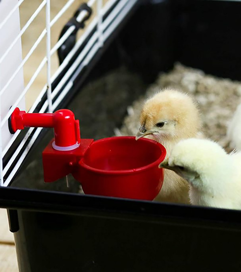 Automatic Chick Cup Waterer