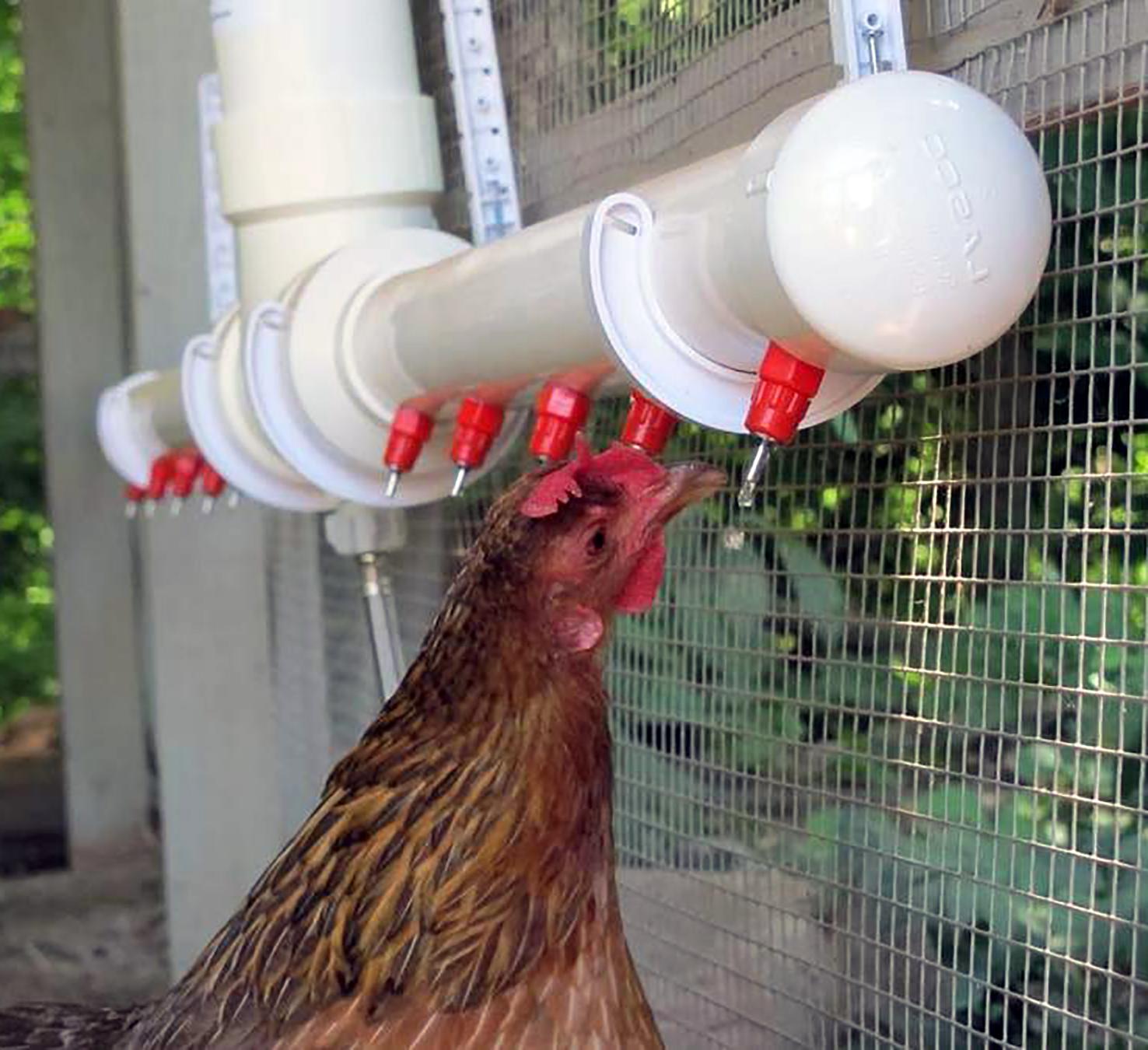 PVC chicken waterer