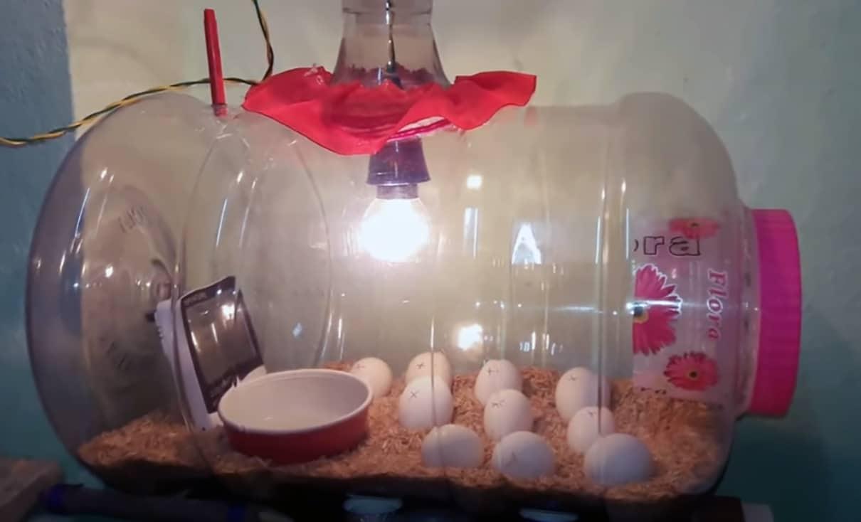 bowl of water for egg incubator